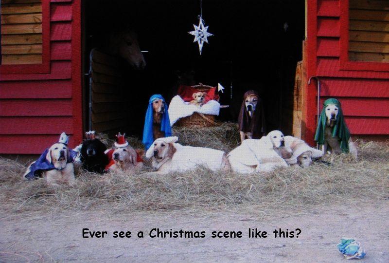 Dog Christmas scene